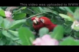 Xxx ma beta marathi hd videos