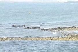 Seal todte huye balaghat chudai